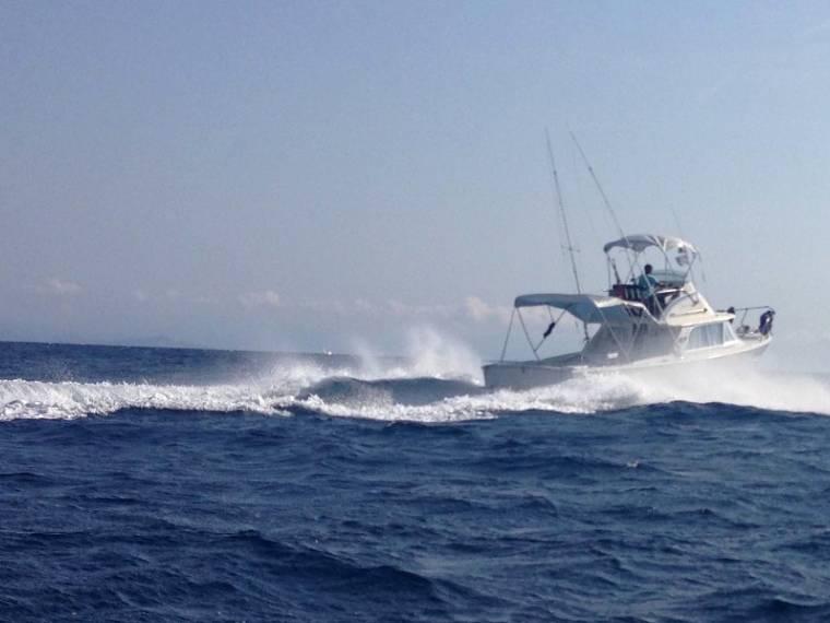 31 Sport Fisherman