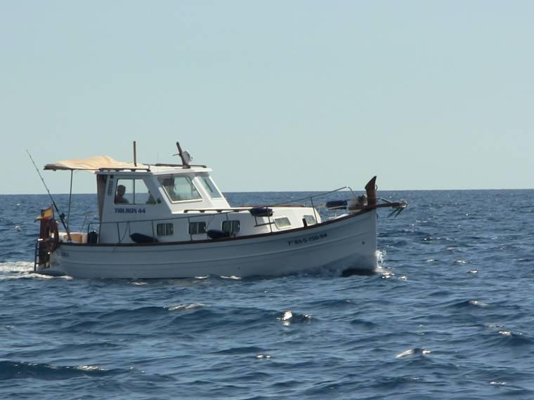 Tiburón 44