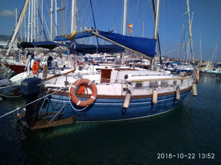 Delfin 31