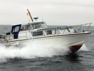 Osbourne King Falcon 33