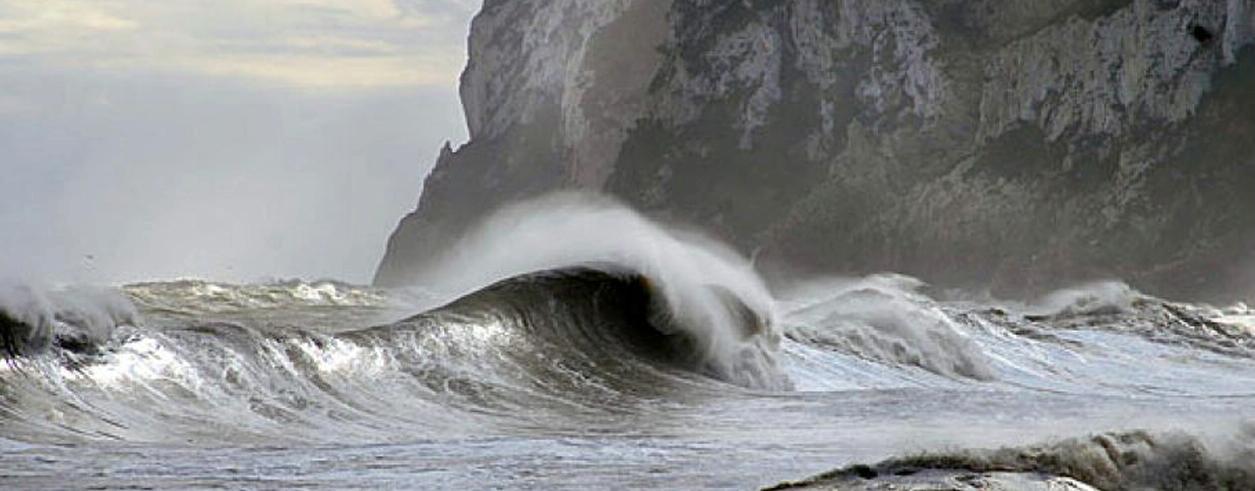 Swans Marine Foto  1